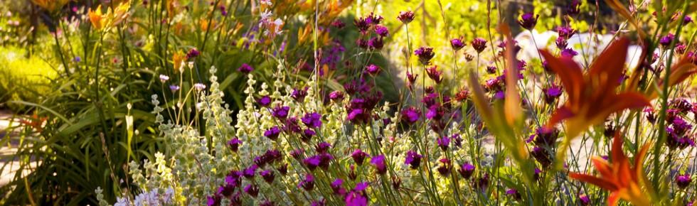london garden landscaping