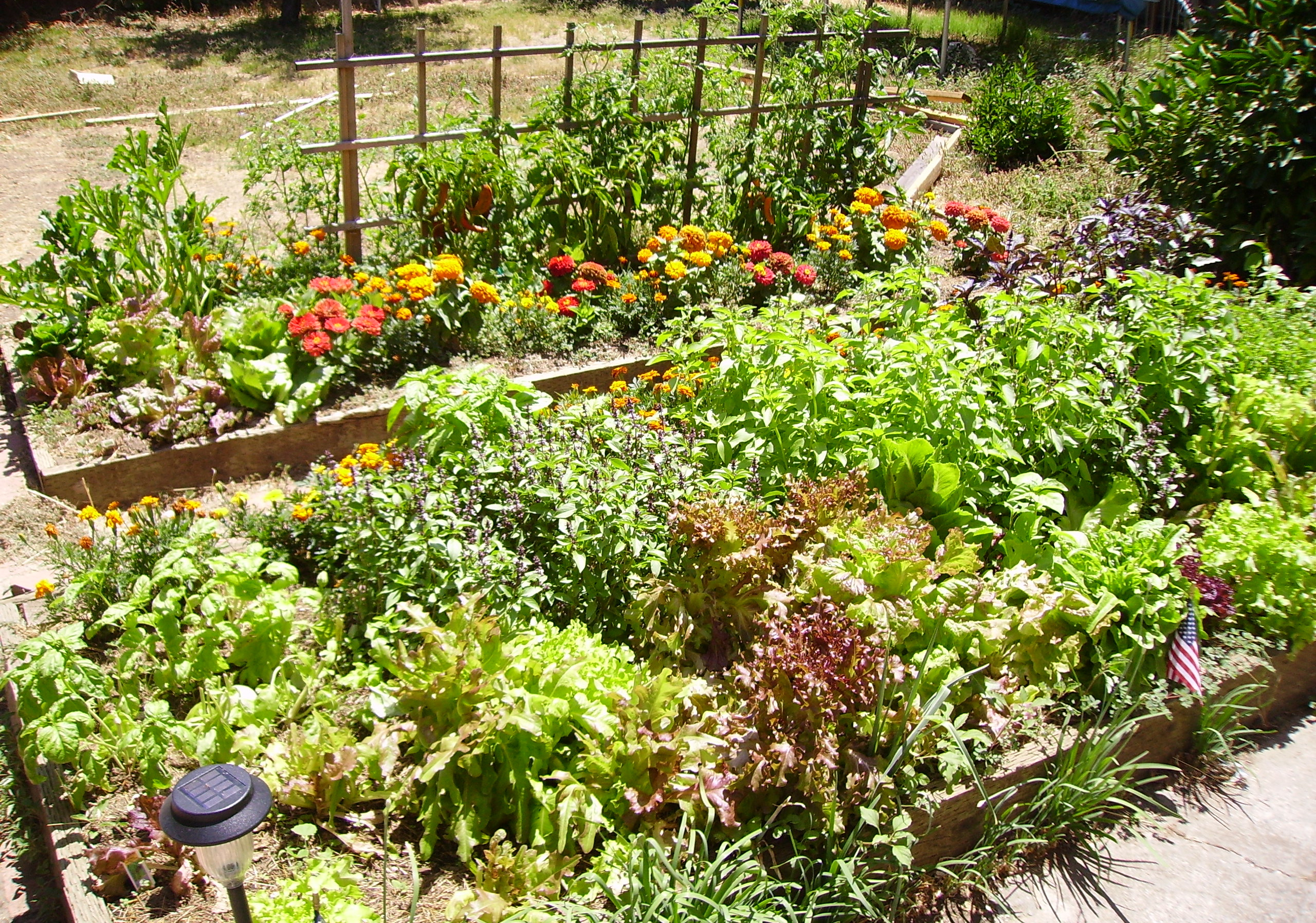 Edible gardens grow your own veg sustainable green garden for Vegetable garden