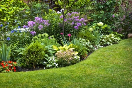 garden plants contemporary garden planting gardening design services