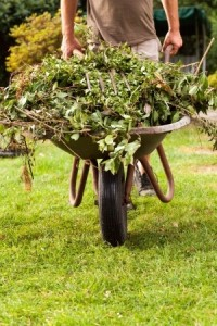 gardener croydon