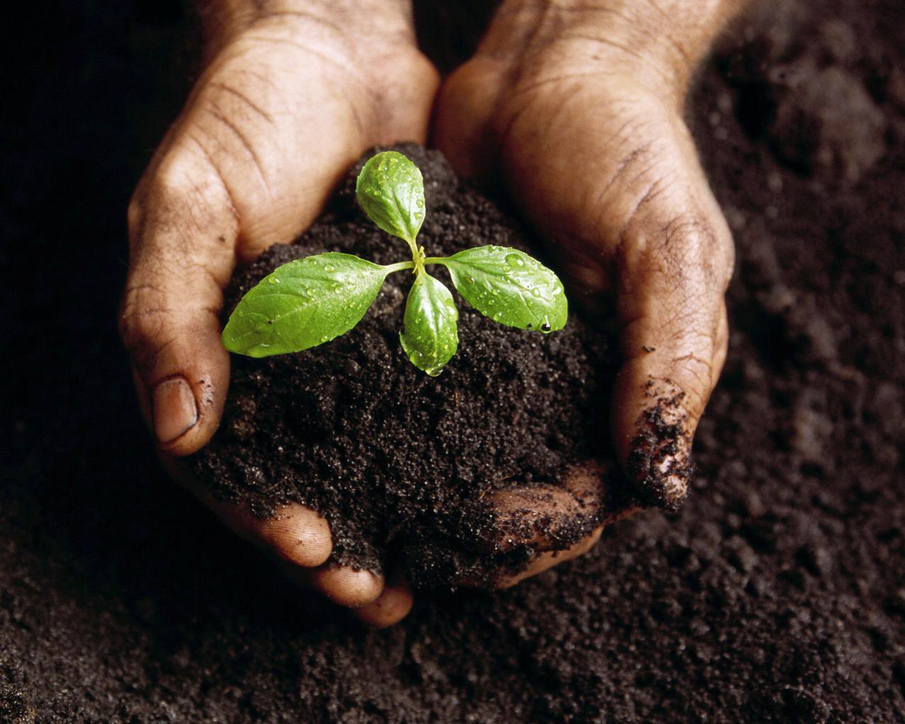 Planting-vegetables-london