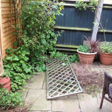 gardener Forest Hill - before shots