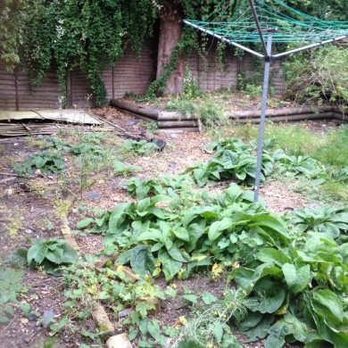 Blackheath garden redesign- before shot